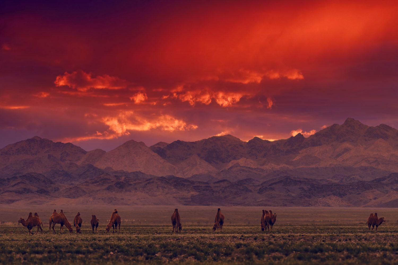 viaje fotografico Mongolia